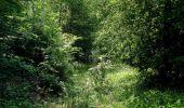 Randonnée Marche LACROIX-SAINT-OUEN - en forêt de Compiegne_16_Boquet Gras_Béthisy_Prés du Rosoir - Photo 44