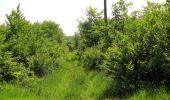 Randonnée Marche LACROIX-SAINT-OUEN - en forêt de Compiegne_16_Boquet Gras_Béthisy_Prés du Rosoir - Photo 25