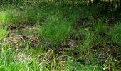 Randonnée Marche LACROIX-SAINT-OUEN - en forêt de Compiegne_16_Boquet Gras_Béthisy_Prés du Rosoir - Photo 17