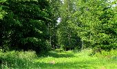 Randonnée Marche LACROIX-SAINT-OUEN - en forêt de Compiegne_16_Boquet Gras_Béthisy_Prés du Rosoir - Photo 42