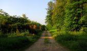 Randonnée Marche LACROIX-SAINT-OUEN - en forêt de Compiegne_16_Boquet Gras_Béthisy_Prés du Rosoir - Photo 124
