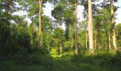 Randonnée Marche LACROIX-SAINT-OUEN - en forêt de Compiegne_16_Boquet Gras_Béthisy_Prés du Rosoir - Photo 3