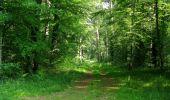 Randonnée Marche LACROIX-SAINT-OUEN - en forêt de Compiegne_16_Boquet Gras_Béthisy_Prés du Rosoir - Photo 85