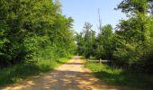Randonnée Marche LACROIX-SAINT-OUEN - en forêt de Compiegne_16_Boquet Gras_Béthisy_Prés du Rosoir - Photo 64