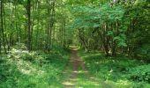 Randonnée Marche LACROIX-SAINT-OUEN - en forêt de Compiegne_16_Boquet Gras_Béthisy_Prés du Rosoir - Photo 92