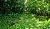 Randonnée Marche LACROIX-SAINT-OUEN - en forêt de Compiegne_16_Boquet Gras_Béthisy_Prés du Rosoir - Photo 71