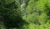 Randonnée Marche LACROIX-SAINT-OUEN - en forêt de Compiegne_16_Boquet Gras_Béthisy_Prés du Rosoir - Photo 30