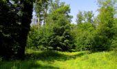 Randonnée Marche LACROIX-SAINT-OUEN - en forêt de Compiegne_16_Boquet Gras_Béthisy_Prés du Rosoir - Photo 67