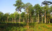 Randonnée Marche LACROIX-SAINT-OUEN - en forêt de Compiegne_16_Boquet Gras_Béthisy_Prés du Rosoir - Photo 106