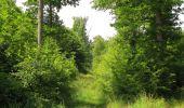 Randonnée Marche LACROIX-SAINT-OUEN - en forêt de Compiegne_16_Boquet Gras_Béthisy_Prés du Rosoir - Photo 28