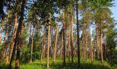 Randonnée Marche LACROIX-SAINT-OUEN - en forêt de Compiegne_16_Boquet Gras_Béthisy_Prés du Rosoir - Photo 87