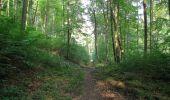 Randonnée Marche LACROIX-SAINT-OUEN - en forêt de Compiegne_16_Boquet Gras_Béthisy_Prés du Rosoir - Photo 103
