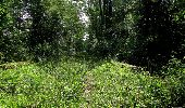 Randonnée Marche LACROIX-SAINT-OUEN - en forêt de Compiegne_16_Boquet Gras_Béthisy_Prés du Rosoir - Photo 47