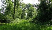 Randonnée Marche LACROIX-SAINT-OUEN - en forêt de Compiegne_16_Boquet Gras_Béthisy_Prés du Rosoir - Photo 62