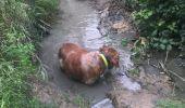 Trail Walk Arguedas - tour du parc animalier - Photo 7