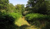 Randonnée Marche LACROIX-SAINT-OUEN - en forêt de Compiègne_35_la Croix Saint-Sauveur_le Ru du Goderu - Photo 10