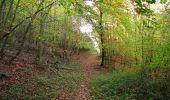 Randonnée Marche SAINT-JEAN-AUX-BOIS - en forêt de Compiègne_32_11_2019_les Tournantes de la Muette et sous la Tête Saint-Jean - Photo 168