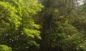 Randonnée Marche MUHLBACH-SUR-BRUCHE - Le Jardin des Fées par la cascade de Soulzbach - Photo 12