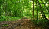 Randonnée Marche COYOLLES - en forêt de Retz_78_les rayons du Rond Capitaine - Photo 26