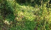 Randonnée Marche LOCMELAR - ballade 270719 - Photo 28