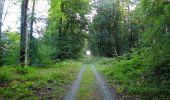 Trail Walk DAMPLEUX - en forêt de Retz_80_sur la Route Tortue et la Route Droite - Photo 59