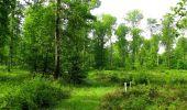 Randonnée Marche COYOLLES - en forêt de Retz_78_les rayons du Rond Capitaine - Photo 59