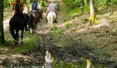 Trail Equestrian Libin - Chevauchée des vallées sauvages  - Photo 1