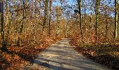 Trail On foot VIEUX-MOULIN - en forêt de Compiègne_23_la Grotte des Ramoneurs_le Mont Berny - Photo 86