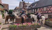 Trail Horseback riding SIGOLSHEIM - 2019-06-09 Journee Sigolsheim boucle - Photo 4