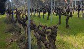 Randonnée Marche SAINT-ETIENNE-DU-GRES - Saint Etienne du Grès  - Photo 1