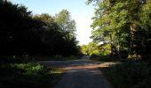 Trail Walk DAMPLEUX - en forêt de Retz_80_sur la Route Tortue et la Route Droite - Photo 138