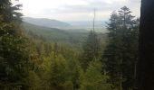 Randonnée Marche MUHLBACH-SUR-BRUCHE - Le Jardin des Fées par la cascade de Soulzbach - Photo 13