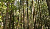 Randonnée Marche Havelange - Bois, Rivière et champs - Photo 3