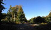 Trail Walk DAMPLEUX - en forêt de Retz_80_sur la Route Tortue et la Route Droite - Photo 196