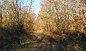 Trail Walk RETHEUIL - en forêt de Retz_76_dans les forêts de Retz et de Compiègne - Photo 80