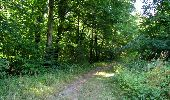Randonnée Marche LACROIX-SAINT-OUEN - en forêt de Compiègne_35_la Croix Saint-Sauveur_le Ru du Goderu - Photo 26