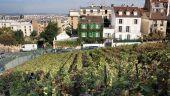 Point d'intérêt PARIS - Les vignes de Montmartre - Photo 1