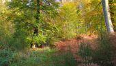 Point d'intérêt SAINT-JEAN-AUX-BOIS - Point 39 - Photo 10