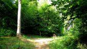 Point d'intérêt SAINT-JEAN-AUX-BOIS - Point 45 - Photo 5