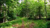 place SAINT-JEAN-AUX-BOIS - Point 42 - Photo 6