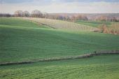 Point d'intérêt Plombières - Vignes de Merckhof - Photo 1