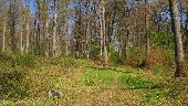 place PUISEUX-EN-RETZ - Point 21 - Photo 5