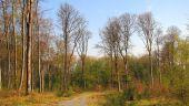place PUISEUX-EN-RETZ - Point 21 - Photo 1