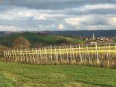 Point d'intérêt Plombières - Vignes de Merckhof - Photo 3