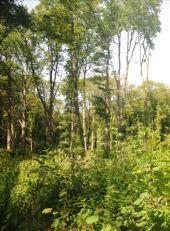 place Viroinval - 3 - Forêts en fond de vallée - Photo 2