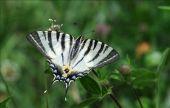 Point d'intérêt Viroinval - 2 - Fleurs et papillons - Photo 1