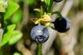 Point d'intérêt Florenville - 3 - Les plantes caractéristiques - Photo 2