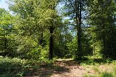 Point d'intérêt Florenville - 2 - Hêtraie et faune - Photo 1