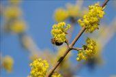 place Viroinval - 1 - Les arbres de chez nous - Photo 2