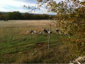 place LIMOGNE-EN-QUERCY - Chèvres au pâturage - Photo 1